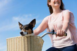 Was Sie beim Kauf einer Fahrradtasche für Ihren Hund beachten sollten?